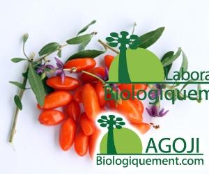 Maigrir avec les feuilles de goji antioxydantes : plus efficaces que le thé vert ?