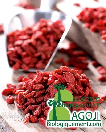 Nutriments et propriétés du Goji bio