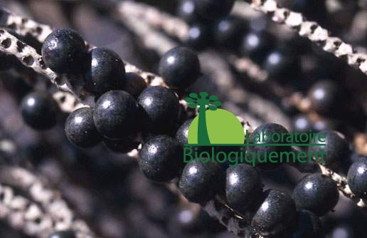 acai-goji-agoji-superfruit-antioxidant