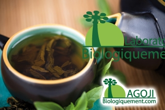 Thé de Goji, feuilles de Goji antioxydant
