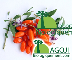 Feuilles de goji bio pour thé antioxydant naturel puissant