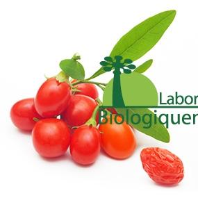 La baie de goji bio l'un des fruits les plus antioxydant au monde